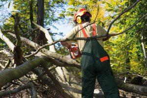 Holzhandelsverordnung – rechtssicher umsetzen mit IT