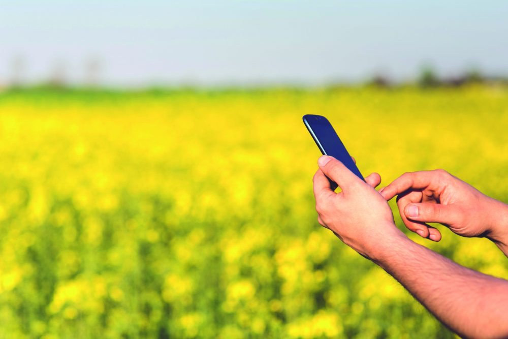 Tracking bis zum Stall und auf den Acker: In der SAP-Branchenlösung Foodsprint sind alle Herkunftsnachweise dokumentiert und gelangen als QR-Code auf die Verpackung. Der Kunde kann diese Informationen jederzeit einsehen. (Bild: ©Kaboompics/pexels.com)